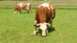 Hof- und Rinderbörse
