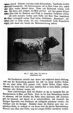 Abdruck aus Tierzüchtung und Züchtungsbiologie (1925)