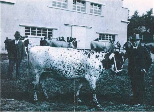Tigerkalbin 1930